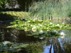 reflection-in-pond-lillies